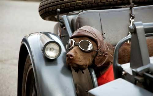 Nhưng may ra cũng được đời sống sang chảnh: đi siêu xe, đeo mắt kính xịn.