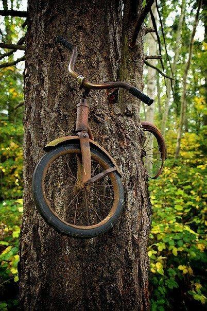 """Để treo được chiếc xe đạp vào thân cây quả không phải là chuyện """"dễ xơi""""."""