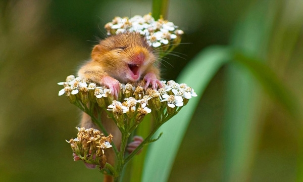 Một chú sóc đang cười khoái chí trên đóa hoa dại.