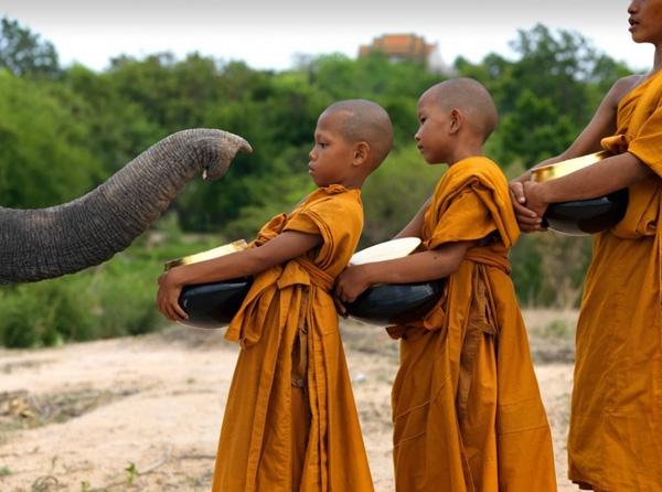 Một chú voi đang trêu chọc các chú tiểu.