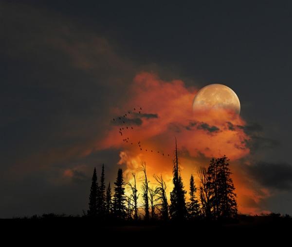 Bức ảnh thiên nhiên đẹp mê hoặc như thể photoshop.