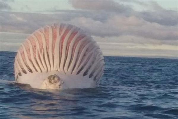 Vật thể khổng lồ kì dị xuất hiện trên biển gây xôn xao dư luận.