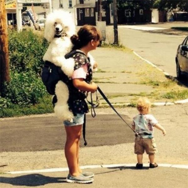 Không biết đứa nào là con, đứa nào mới là chó.