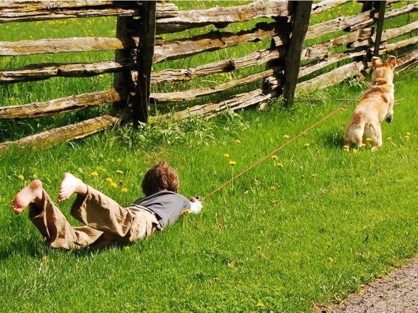 Nếu thằng bé bị té thì là ngược đãi trẻ con. Nếu thằng bé cố tình trượt cỏ thì là ngược đãi động vật.