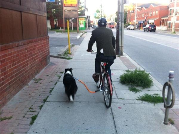 Có tinh thần tập thể dục là tốt, nhưng đừng có chọc cho con chó nó phi nước đại là được.