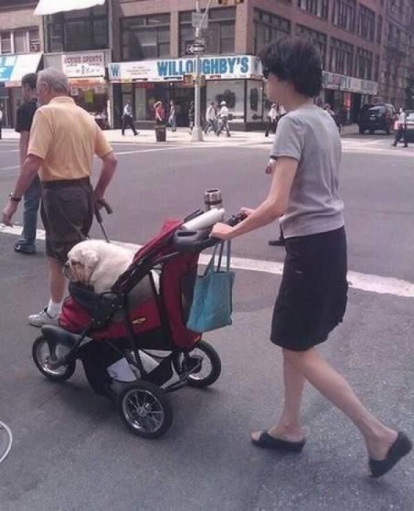 Dắt chó và đi dạo là hai chuyện không có liên quan gì đến nhau.