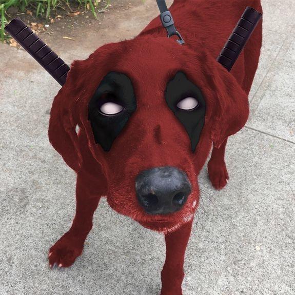 Dogpool này hơi ảo nhỉ?
