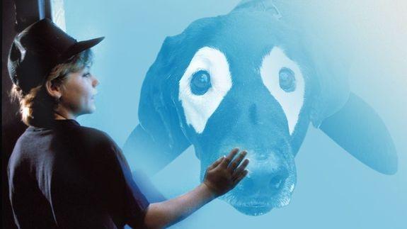 Chú chó đại dương.