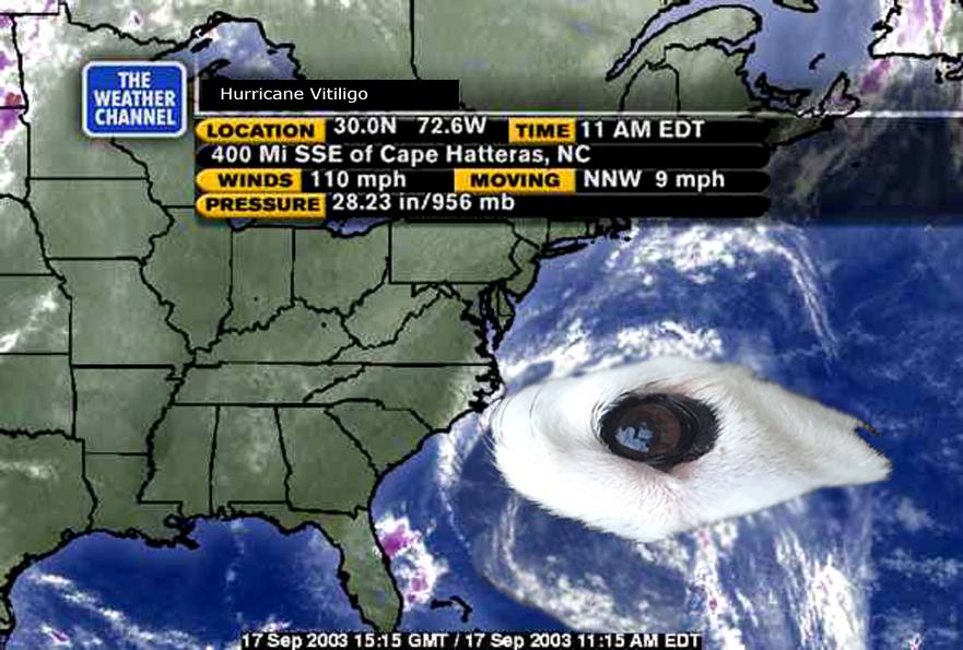 Cơn bão ảnh chế Rowdy đang đổ bộ...