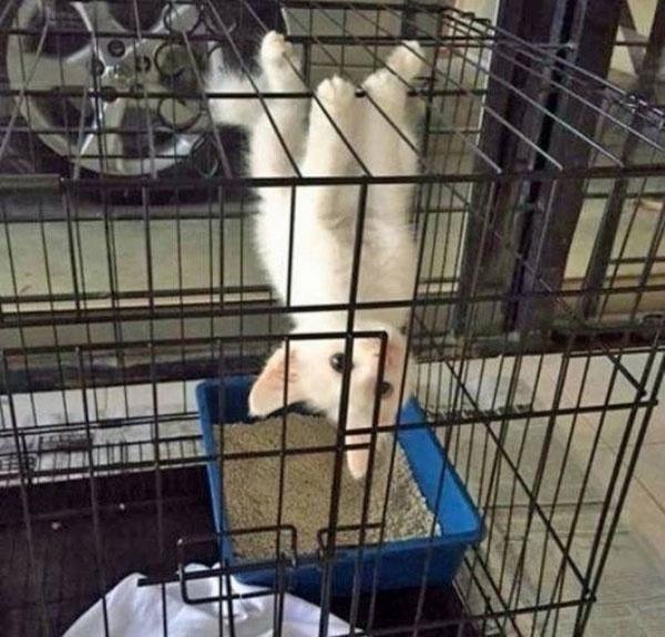 4. Siêu điệp viên mèo trắng chuẩn bị cho quá trình vượt ngục.