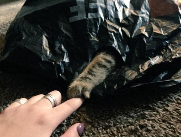 10. Đưa tay ra đây nào, và thầy bói meo meo sẽ cho con biết bé mèo đáng yêu của con đang trốn ở đâu.
