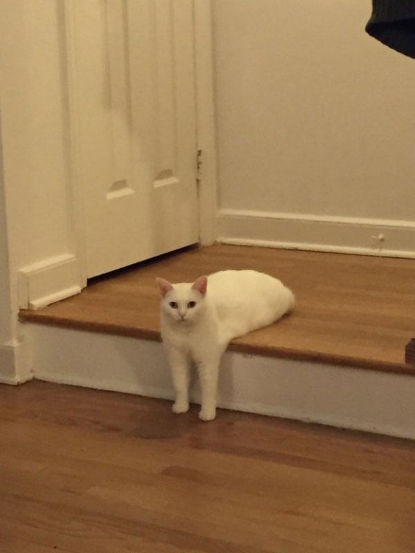 17. Mỹ nhân mèo chân dài nuột nà.