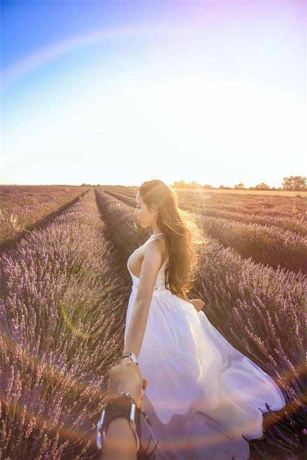 Những cánh đồng hoa oải hương trên thảo nguyên VALENSOLE của miền nam nước Pháp.(Ảnh: MrLee)