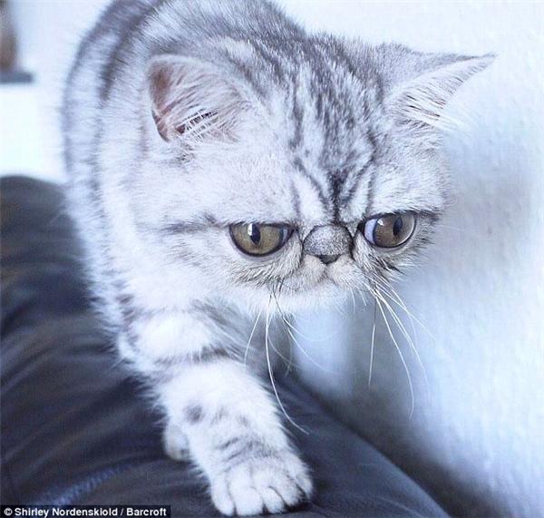 Chú mèo con có đôi mắt to tròn không bao giờ nhắm