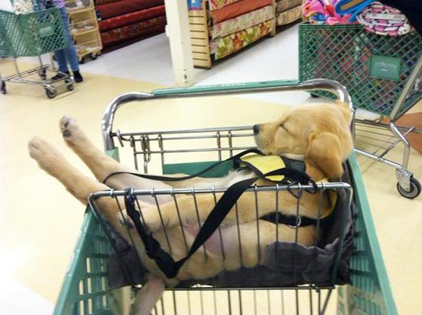 Không có gì buồn ngủ hơn là phải lê lết theo các mẹ các chị khắp siêu thị suốt cả nửa ngày.
