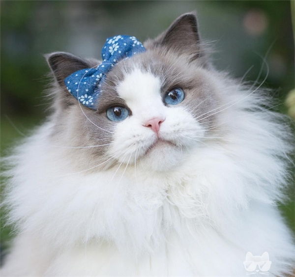 Ai có thể đủ xinh đẹp và kiêu sa để trở thànhnữ vương mèo ngoại trừ ta?