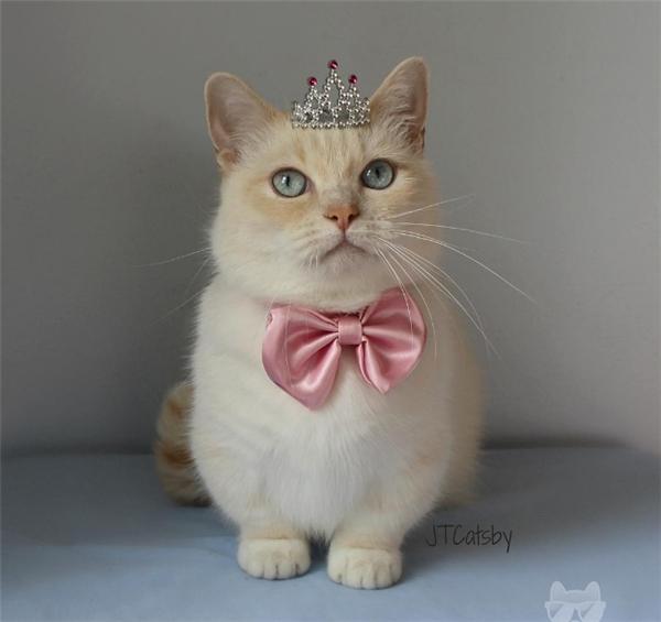 Hôm nay, ta trịnh trọng tuyên bố rằng ta sẽ là tân nữ vương trong ngôi nhà này.