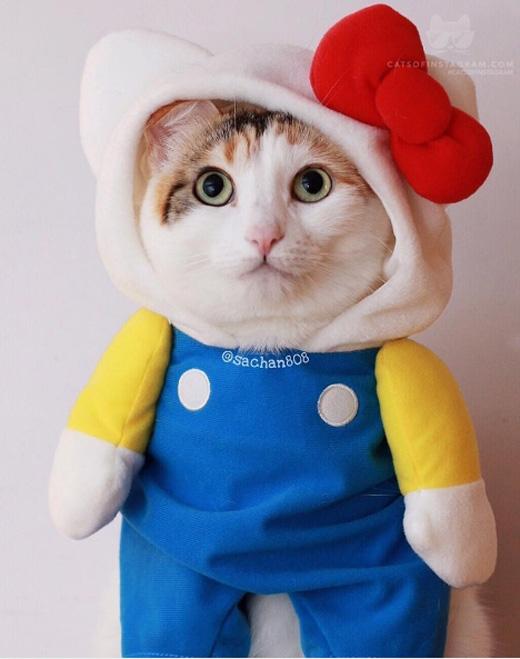 Đừng gianh vị trí mèo Kitty của tớ là được.