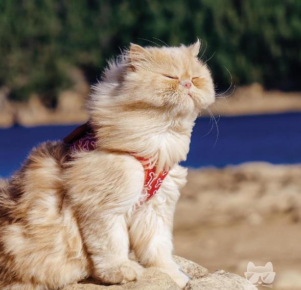 Mèo cũng có nhiều nỗi muộn phiền lắm chứ bộ. Đôi khi cũng cần một cơn gió thổi bay đi tất cả.