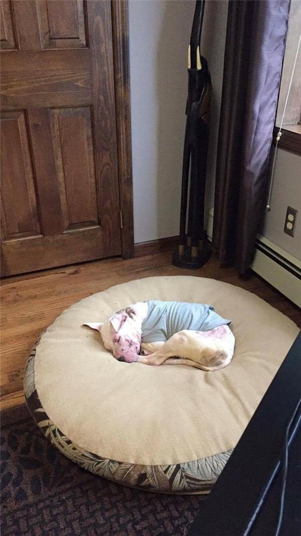Giấc ngủ bình yên trên chiếc giường yêu thích của XO.(Ảnh: The Dodo)
