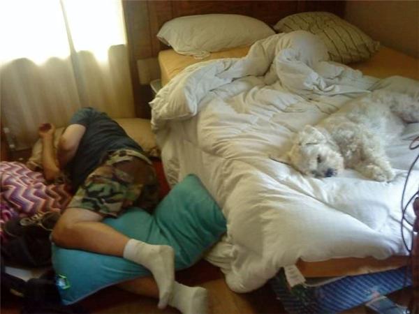 Và nếu cứ nhất định nuôi chó thì sớm muộn gì ngày đó cũng xảy ra.