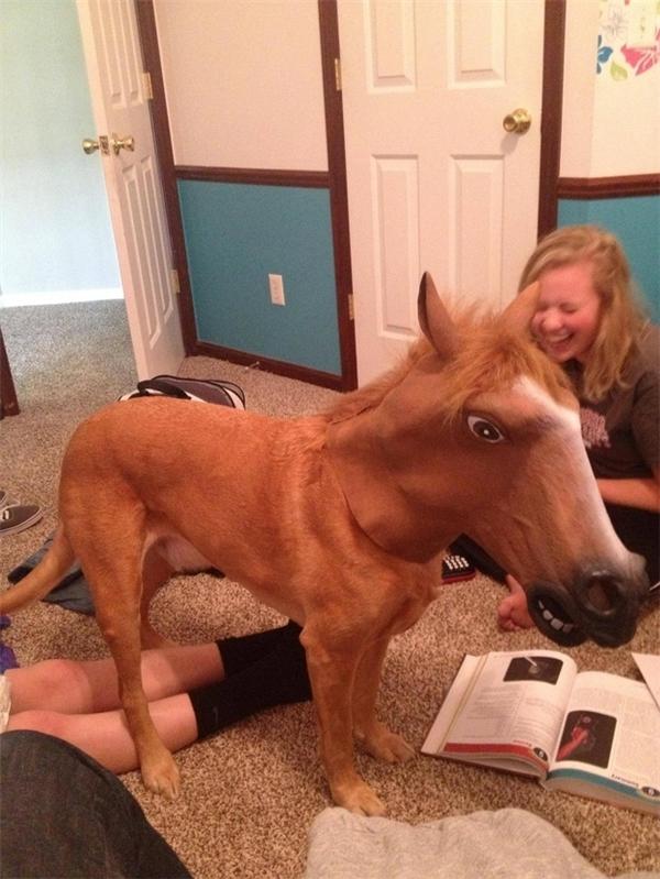 Không phải ai cũng mong muốn trong nhà có một cây hài sao? Hãy nuôi ngay một con chó.