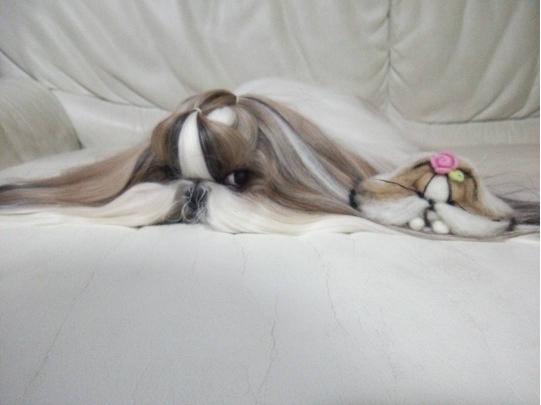 Tan chảy với hai em cún sinh đôi có bộ lông dài đến buồn cười
