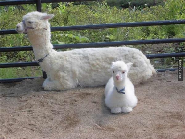 Hai mẹ conMofuhạnh phúc nằm cạnh nhau.