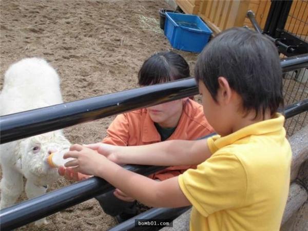 Một cậu bé đến thăm và choMofuuống sữa.