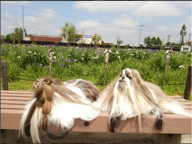 Yuu và Nao rất thích đi hóng mát thanh tịnh và dự các sự kiện.