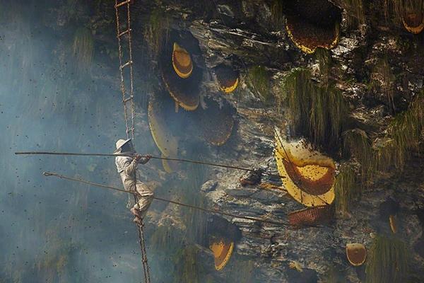 Săn mật ong rừng trên các vách đá cheo leo là truyền thống có từ lâu đời của bộ tộc ngườiGurung ở Nepal.