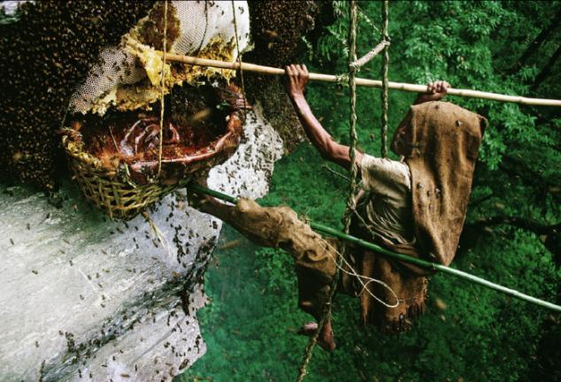 Suốt thời gian đó họ sẽ phải chịu đựng những vết đốt nhức nhối của bầy ong.