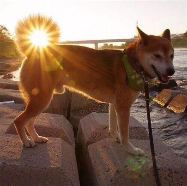 Đây là lần đầu tiên trong lịch sử người ta nhìn vào một con cún và trông thấy chiếc đuôi của nó đầu tiên.