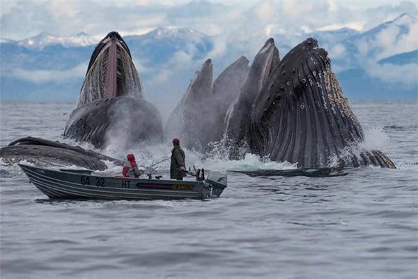 Chỉ là những con cá voi đang phô trương sức mạnh thôi mà. Chúng có quật nát chiếc thuyền của bạn và lôi bạn xuống nước không?