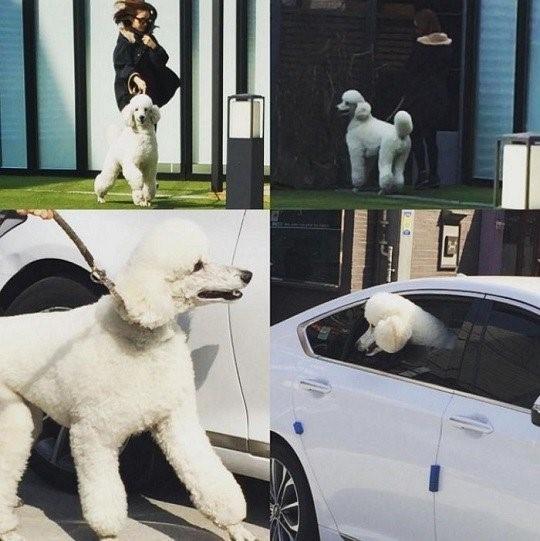 Kim Tae Hee thường đến nhà Bi Rain. (Ảnh: Internet)