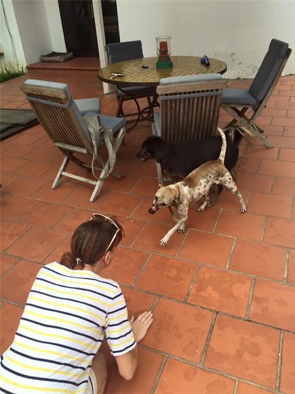 Tin vui bất ngờ sau khi mất tích của chú chó bị hoại tử mõm