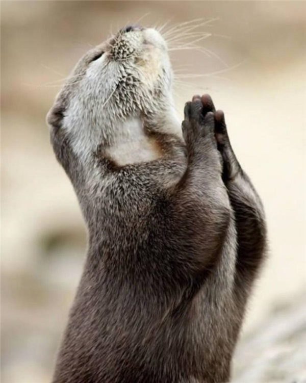 9. Anh bạn đang cầu nguyện điều gì vậy?
