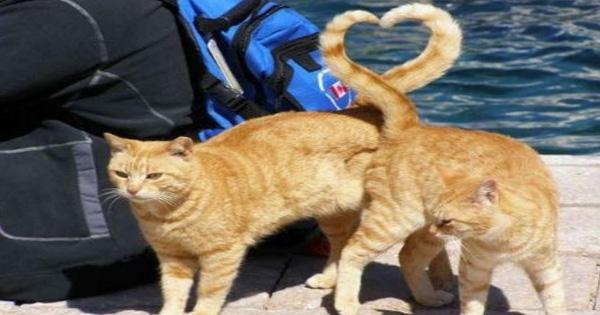 14. Đuôi của hai chú mèo vô tình kết hợp thành hình trái tim.