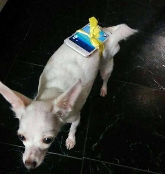 Cún cưng được huy động tối đa cho mục đích lười biếng của chủ nhân. (Ảnh: internet)