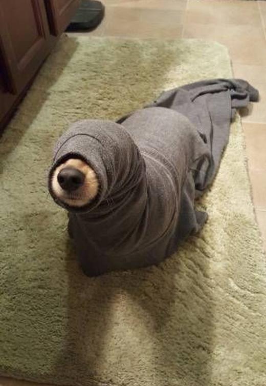 - Ô, ở đâu ra con báo biển xinh thế này? - (Hí hí, mẹ không nhận ra là mình đang hóa trang luôn đó).