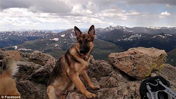 Nhóm leo núi của Jonathan đều bất tỉnh do sét đánh. Đến khi tỉnh dậy, họ phát hiện chú chó Rambo đã ra đi từ lúc nào.(Ảnh: Daily Mail)