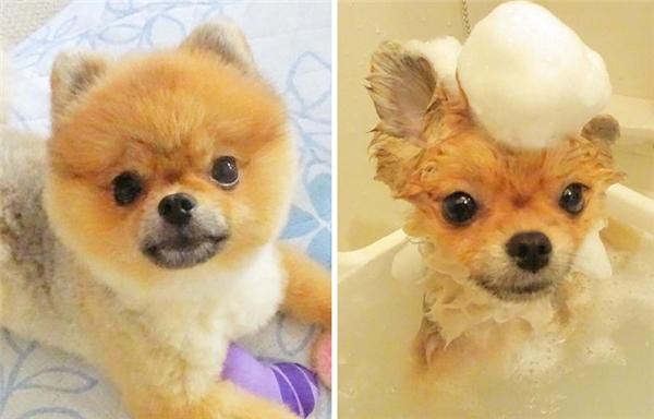 trước và sau khi tắm