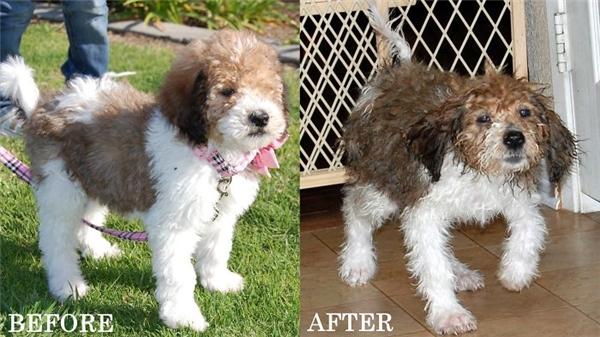 trước và sau khi tắm'