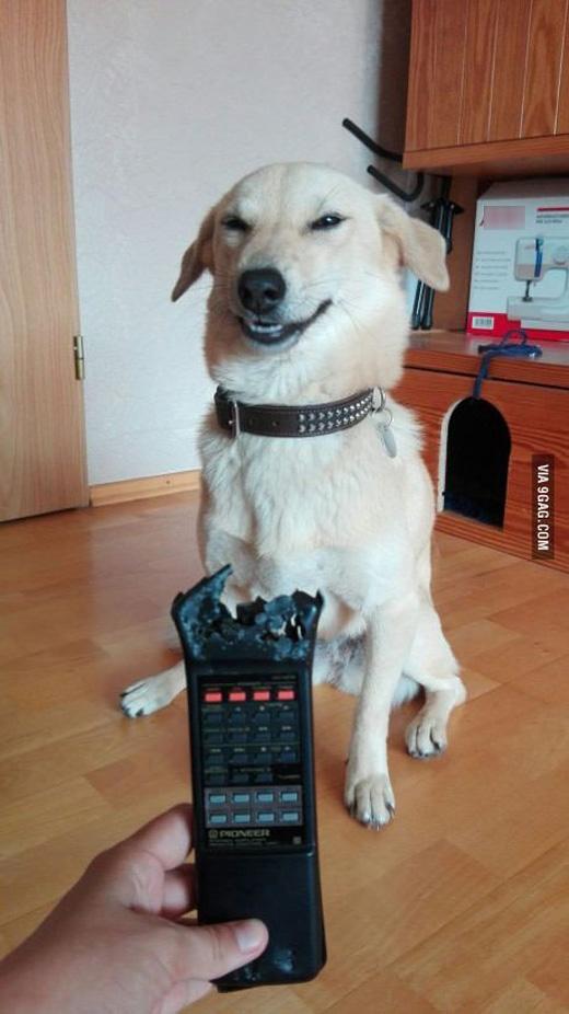 Bố nghĩ làm sao. Con ngoan hiền như thế này làm gì có chuyện cắn nát cái remote của bố được. Nói nhỏ bố nghe thôi nhé, lúc trưa con tận mắt thấy thằng Mèo gặm lấy gặm để nghe chừng thích lắmđó. Thật đó, bố phải tin con.
