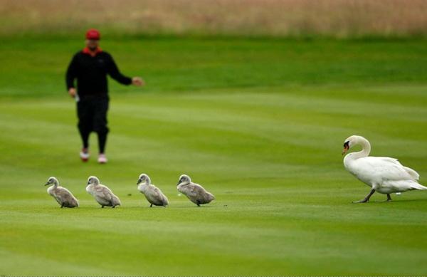 Trận đấu phải gián đoạn 2 tiếng đồng hồ để bà mẹ bỉm sữa dẫn bầy con mọn xuống hồ tắm.