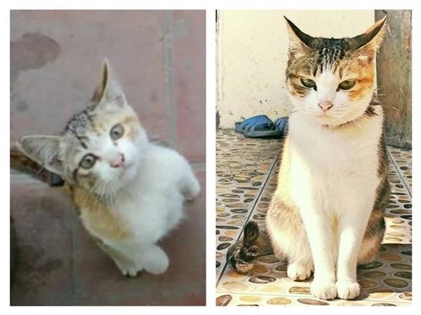 Bài học rút ra khi nuôi mèo là đừng bao giờ bị vẻ ngây thơ lúc nhỏ của nó lừa tình. (Ảnh: Chau Cao)