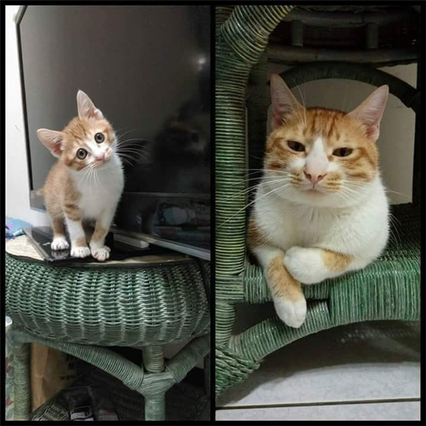 Khi chú mèo lớn lên, người chủ của nó cảm thấy bị lừa gạt... (Ảnh: Đặng Linh)