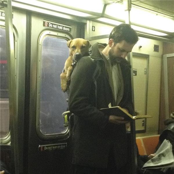 """Anh chủ thì chăm chú đọc sách không biết mình bị chụp lén, nhưng em cú thì lại tỏvẻ mặt lườm lườm như muốn nói: """"Trai của tui, chỉ được chụp, không được manh động."""""""