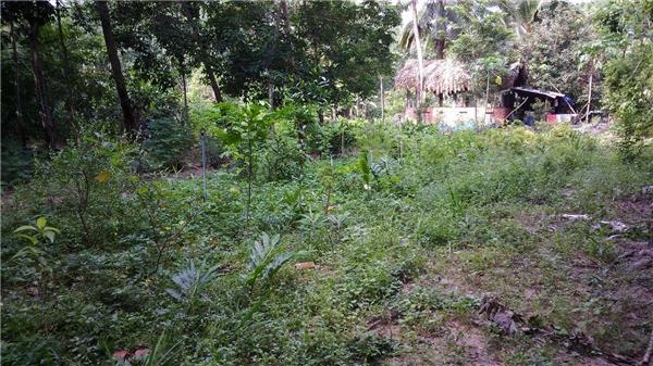 Mảnh vườn 1.000m2 của Minh Nhân.(Nguồn: Internet)
