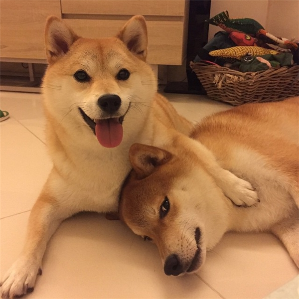 Trong đó 2 đứa lớn nhất trong bầy là Zero và Mika chơi thân với nhau nhất.